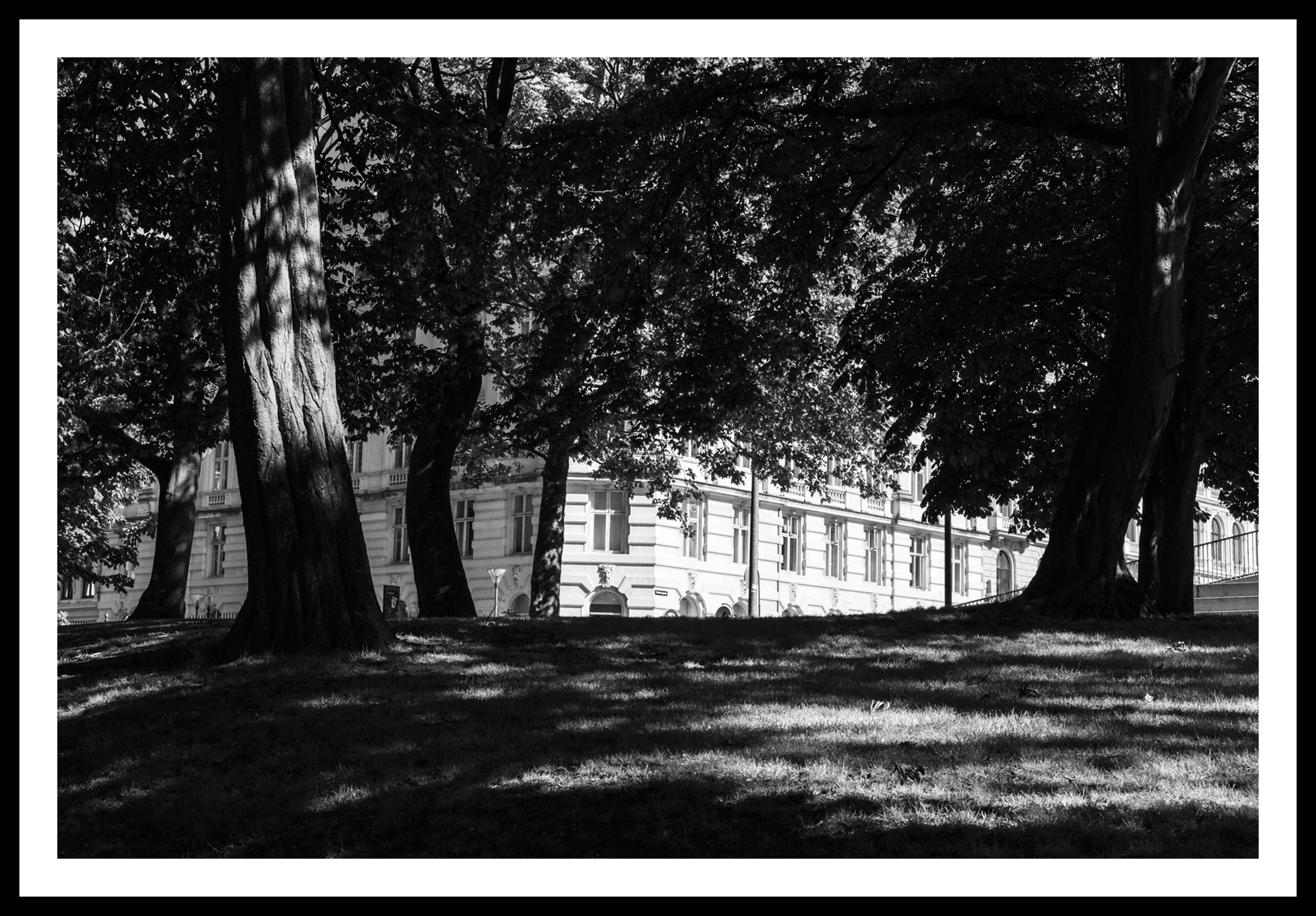 Parklife_I_2020_D14C2633_2020_CURATED_FRAME